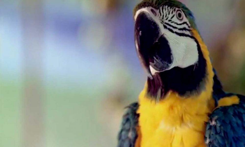 DSK Parrot TVC