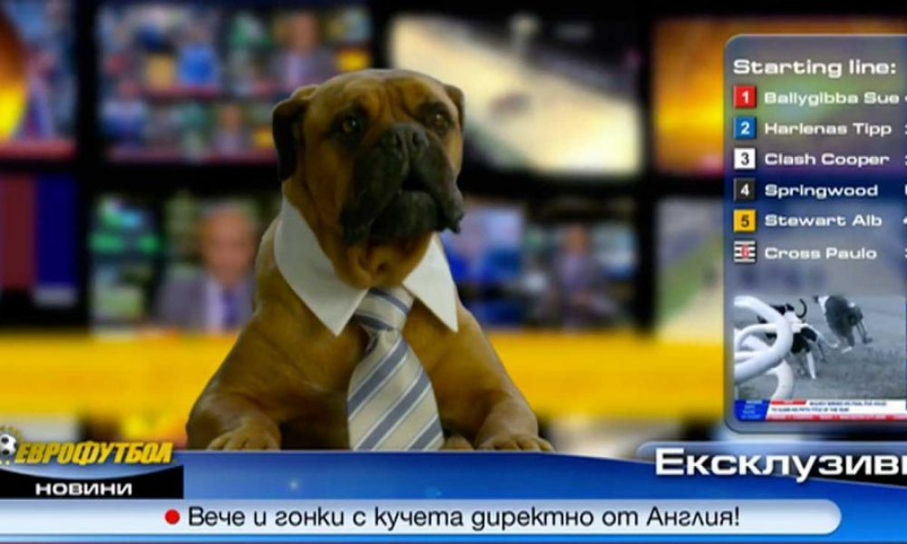 EUROFOOTBAL Dog News TVC